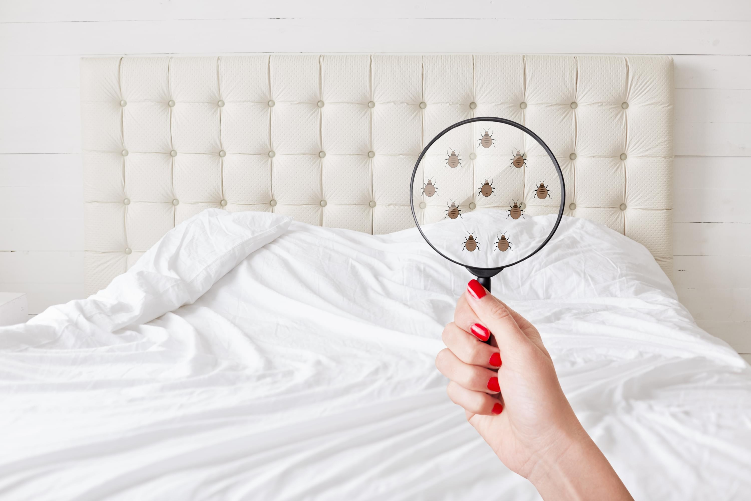 How to Avoid Bed Bugs and Protect Your Home