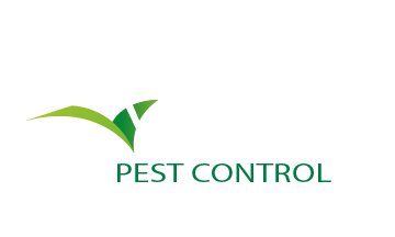 Temecula Pest Control, Murrieta Pest Control, San Diego Pest Control, Riverside Pest Control, bee removal, rodent removal